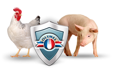 A chicken, Olymel shield and a pork